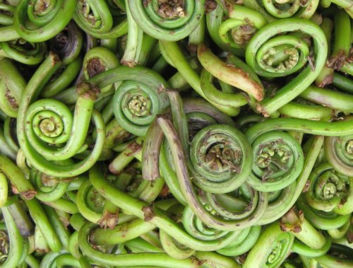 frozen fiddlehead ferns